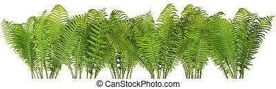 Forest wild fern isolated border - Forest wild Halloween...