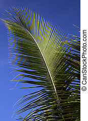 Palm Frond Against a Blue Sky