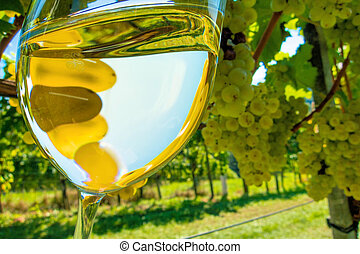 wineglass in vineyard - wine glass with wine in the vineyard...