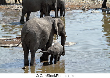 Elephants in the Etosha National Park in Namibia