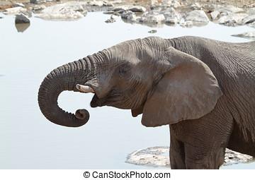 Elephants in the Etosha National Park in Namibia