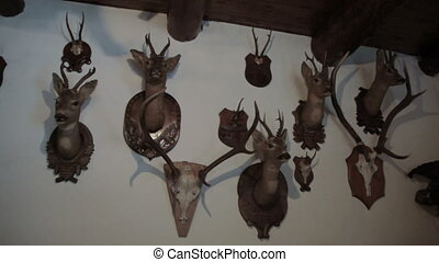 hunting trophies on wall - pan of hunting trophies hung on...