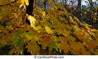 Tree Branches With Yellow Leaves Swaying On The Wind