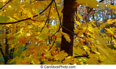 Tree Branches With Lush Yellow Leaves in Autumn Park
