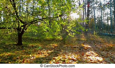 Autumnal Landscape Against Bright Sunlight - This is a...