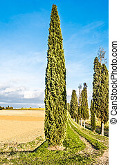 Lucignano in Tuscany - The beautiful countryside of...