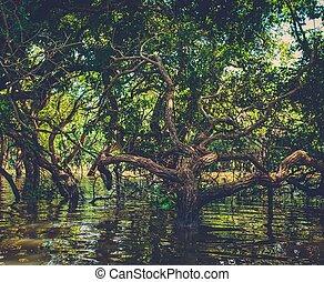 Flooded trees in mangrove rain forest Kampong Phluk village...