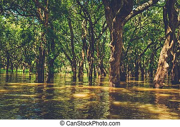 Flooded trees in mangrove rain forest. Kampong Phluk...