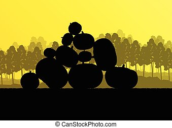 Pumpkin plants with rich harvest on a field for poster