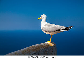 alone seagull with sky and sea background