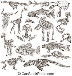bones and skulls of different animals - freehands - Bones...