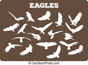 Eagles In Various Poses - Set of different eagle silhouettes...