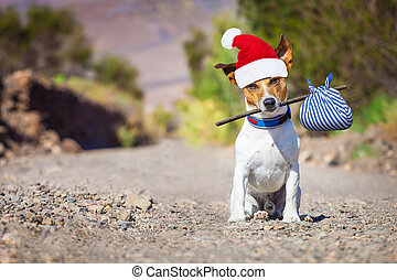 abandoned and lost dog at christmas - jack russell dog...