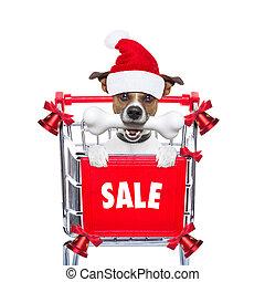 Verkauf, hund, Weihnachten