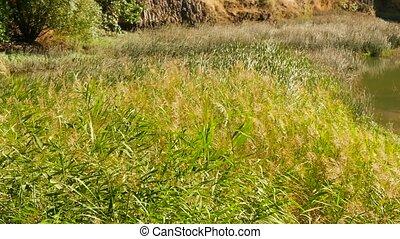 Overgrown Grass next to a Lake - Overgrown Grass next to a...