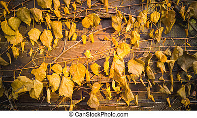 Closeup of golden leaves on old wooden fence - Closeup photo...