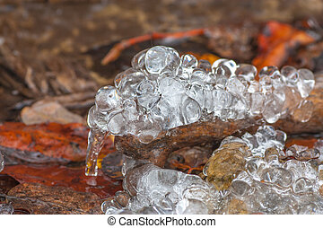 Frozen Drops on Deadwood - Macro of frozen water drops on a...