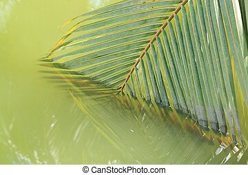 Coconut leaves abstract reflection