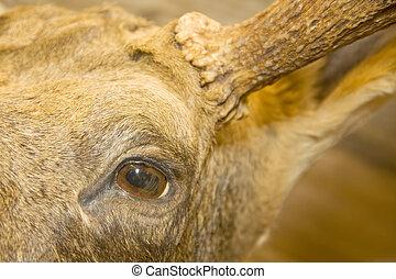 Eye of the elk. Stuffed animal
