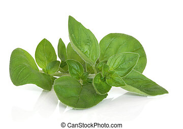 Marjoram Herb Leaf Sprig - Marjoram herb leaf sprig isolated...