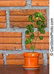 little tree on orange pot