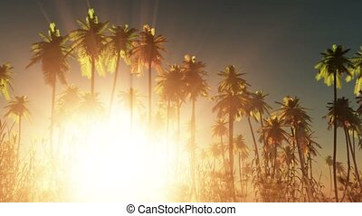 Tropical jungle background with palm tree silhouettes at...
