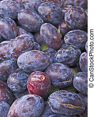 plums - a close-up of damson on a farmer market