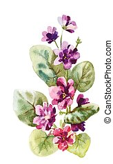 viola watercolor - viola, watercolor illustration