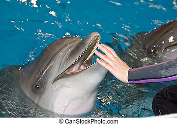 Smiling dolphin and trainer hand