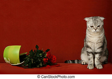 Accused cat and broken pot of flowers - Accused cat and a...