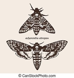 Vector Deaths head hawk moths - Vector hand drawn Deaths...