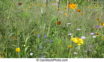 Summer wildflowers - Flower meadow with different sorts of...