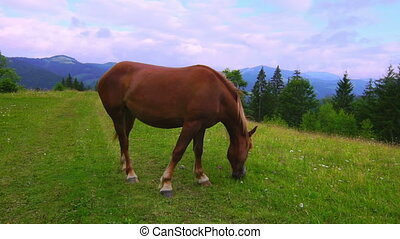 Horse Grazing in a Meadow. - Horse Grazing in a Meadow in...