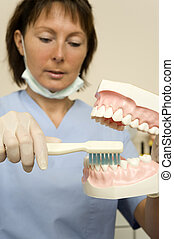 dentist - a dentist shows how to clean teeth correctly