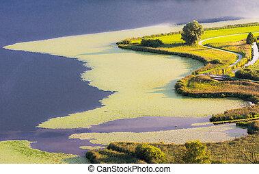 Swampland at lake Hopfensee Bavaria, Germany