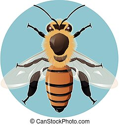 Bee on the blue background