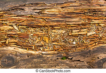 Old rotten wood. Background or texture