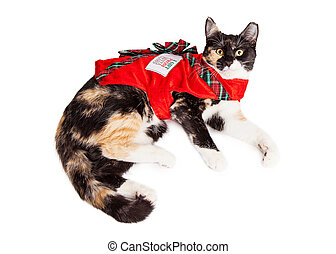 Christmas Gift Calico Cat - Cute Calico breed cat laying...