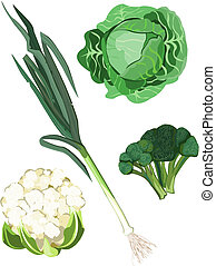 Vegetables - Vegetable icons on white background