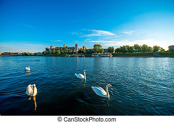 Beautiful view on Vistula river with swans swimming in...