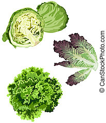 Lettuce icons on white background