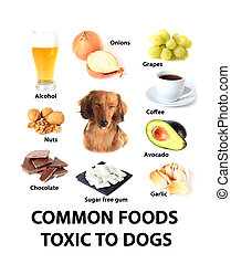 Foods toxic to dogs - Chart of toxic foods for dogs.