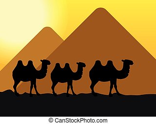 camels in the desert at the pyramid