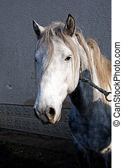 Horse farm. - The horse is the favorite animal of farm.