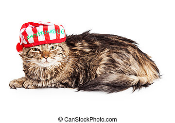 Funny Grumpy Christmas Cat - Funny photo of an angry cat...