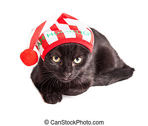 Funny Grumpy Christmas Kitten - Cute little black kitten...