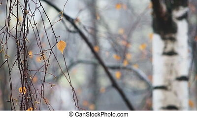 Droplets of rain water on the branch of tree in the autumn forest