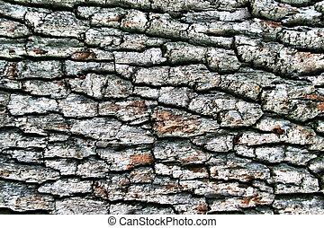 Dark hardwood cortex. Use for texture