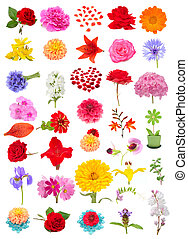 Beautiful Flower Set Isolated on White Background - A...