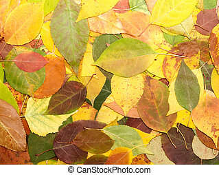 leaves - background from multi-coloured fallen down leaves